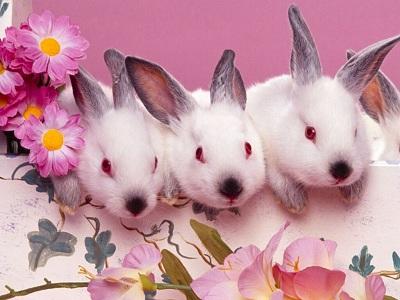 Offerta Pasqua con Benessere in Hotel Misano