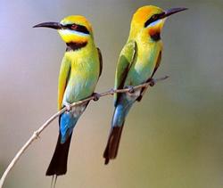 fiera dell'ornitologia pesaro