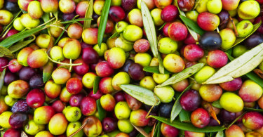 fiera dell'oliva coriano